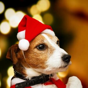 Dogs And Cats Santa Cap Headwear For Christmas   Holiday Gifts   All For Xmas