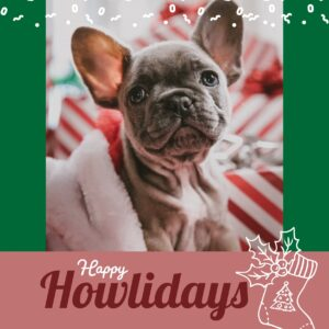 French Bulldog Christmas Card | Greeting Cards | All For Xmas