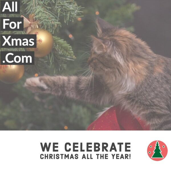 Christmas Tree Curious Cat Card | Greeting Cards | All For Xmas