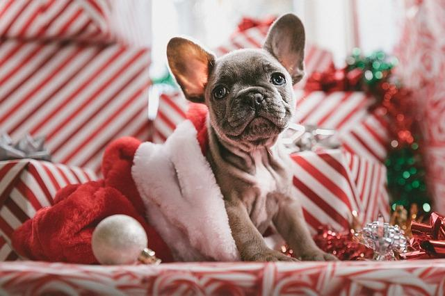 christmas gift present idea for dogs